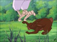 Campion wird von einem Falken angegriffen
